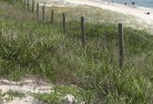 Baudin Beach Revegetation 4