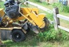 Baudin Beach Stump grinding services 3